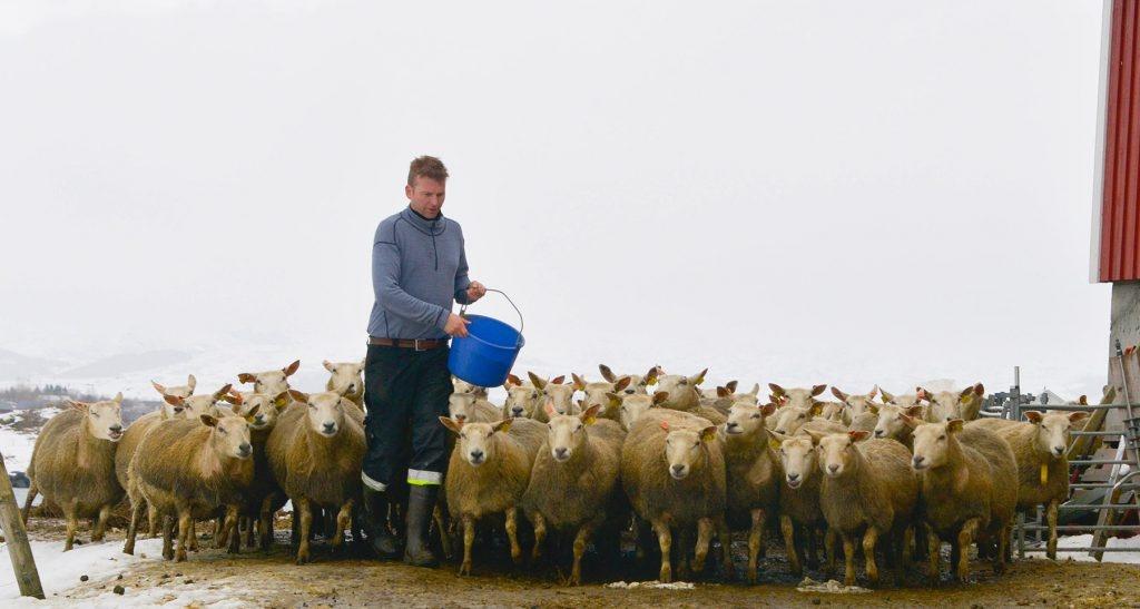 Lofotkraft. Lam, mat, Tone Kvamsdal og Per Berntsen  Foto: Tore Berntsen, Visualdays.no